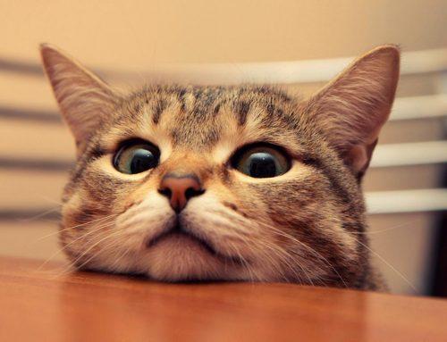 大六壬案例:潜逃的狸花猫